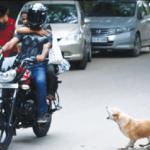Stray dog menace in HSR